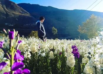 Flores del Peru: Las 6 variedades mas representativas